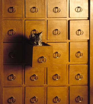Béatrice Giraudeau chaton.jpg