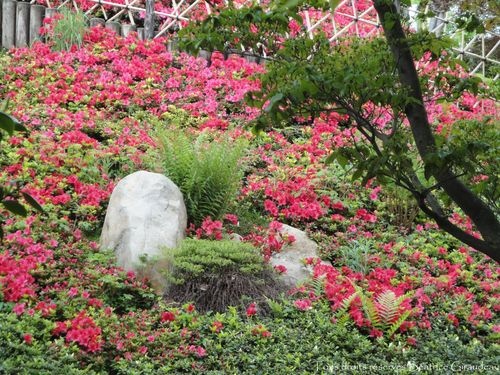 Jardins Albert Kahn.3