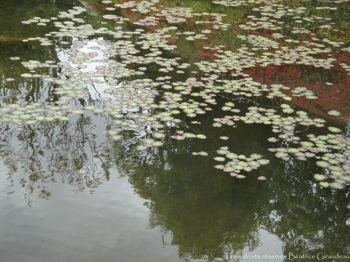 Jardins Albert Kahn.10