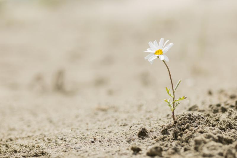 Résilience Déconfinement et Paradoxes